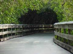 mangroves train