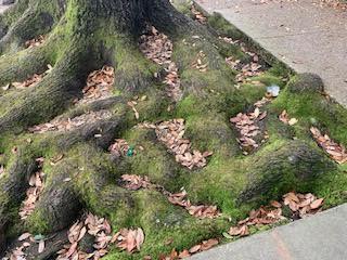 tree drunk